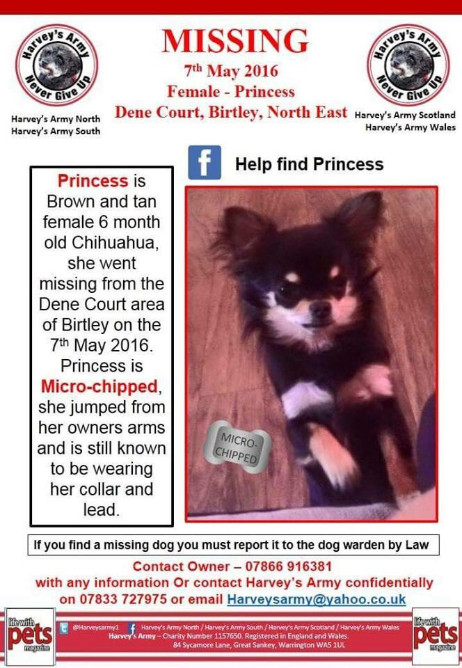 Please RT #HelpFindPrincess #Missing 3 weeks today #Birtley nr #Gateshead #TyneandWear #NorthEast @DogsTrust TY https://t.co/5GqGQvgoVT