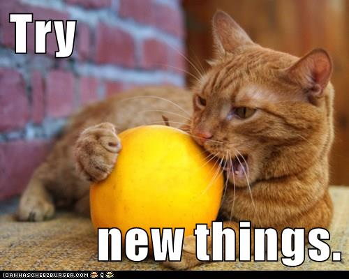 A new #growthmindset cat for #Caturday - Try new things! Lots more cats here: https://t.co/V2TeRjbEYM #MindsetPlay https://t.co/QPFgHRqnea