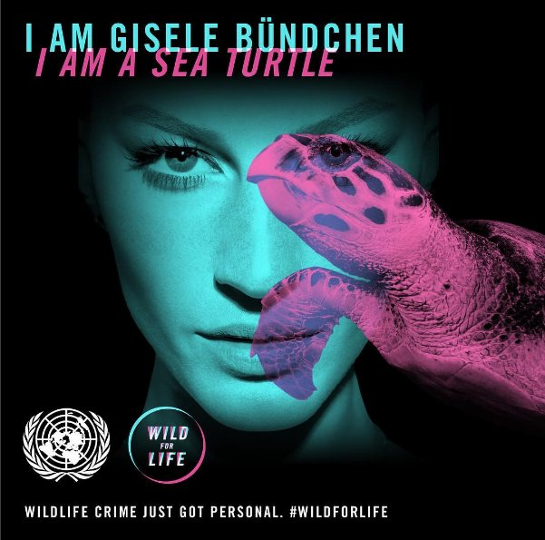 RT @RacingXtinction: Why @giseleofficial is supporting @UN #WildForLife campaign to end poaching https://t.co/CrWvfAZazP https://t.co/Ce427…