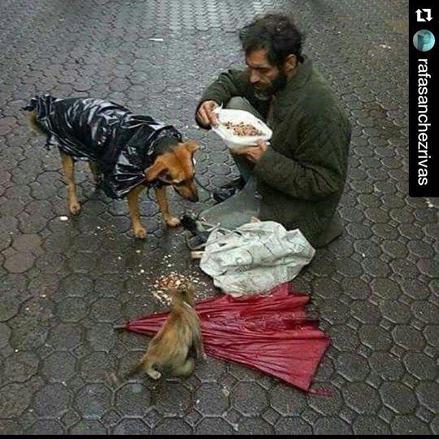 """Para los q abandonan a sus mascotas por  razones de """"crisis"""" y a los q teniendo recursos las dejan morir d hambre https://t.co/H4AKLN6aoW"""