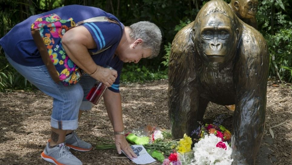 Memorial to remember gorilla killed after boy climbed into enclosure