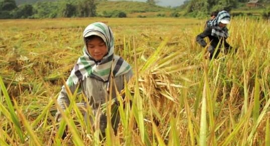 RT @uncclearn RT @UNDP :3 ways our work supports countries to adapt to #climatechange - @HelenClarkUNDP https://t.co/1wJoNUXrvU