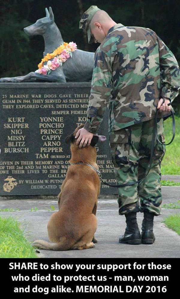 not only men and women gave their life in service. Dogs did too #MemorialDay https://t.co/cAzcNP7Xck