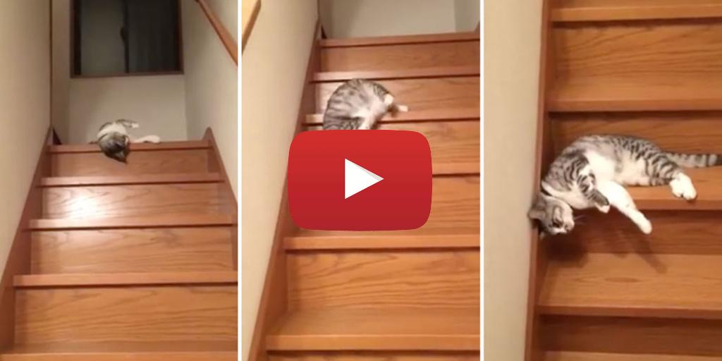 This cat who is too lazy to walk down the stairs is ALL OF US https://t.co/fuPb0URJAn https://t.co/JqAbzjTXF4