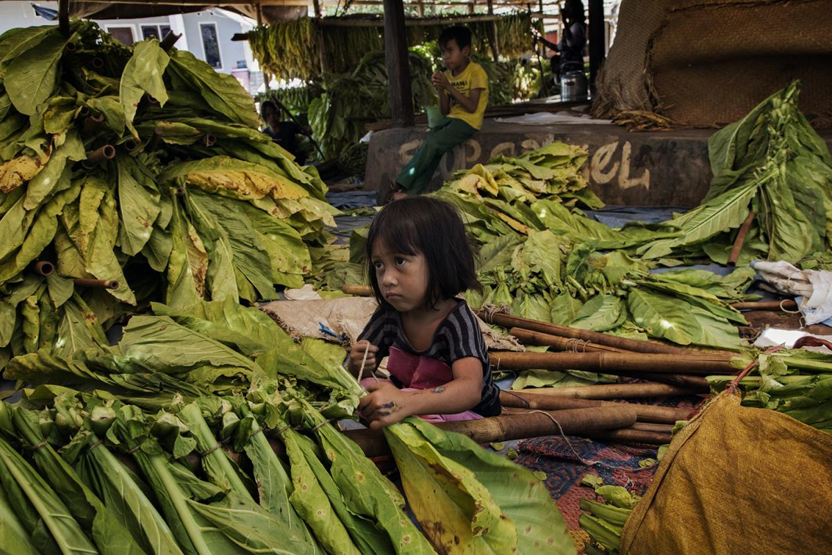 Children should NOT be working on tobacco farms in #Indonesia. #BigTobacco https://t.co/3ilV0vlCjm https://t.co/aW4ZS5XJtG