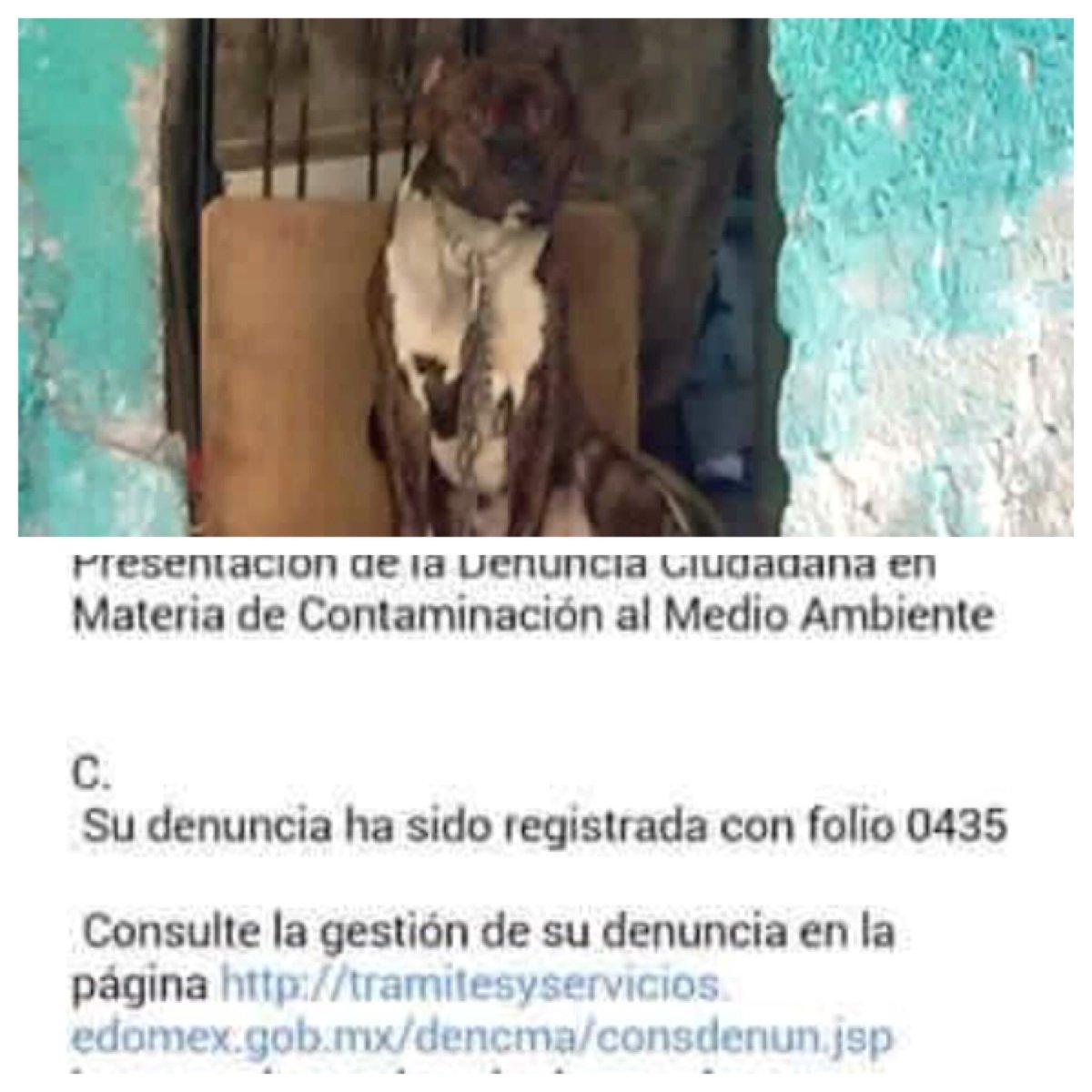 @propaem_sma por favor apoyo para el rescate de este perrito ya hay denuncia @UribeMerle @KryCamacho @YESFUCKYOUTOO https://t.co/96JnnmhKuQ
