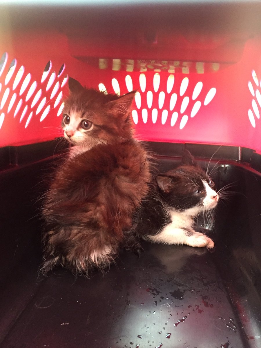 KFD has saved 2 kittens from a storm drain on Rapp just east of the Willis Coves entrance! (1/3)