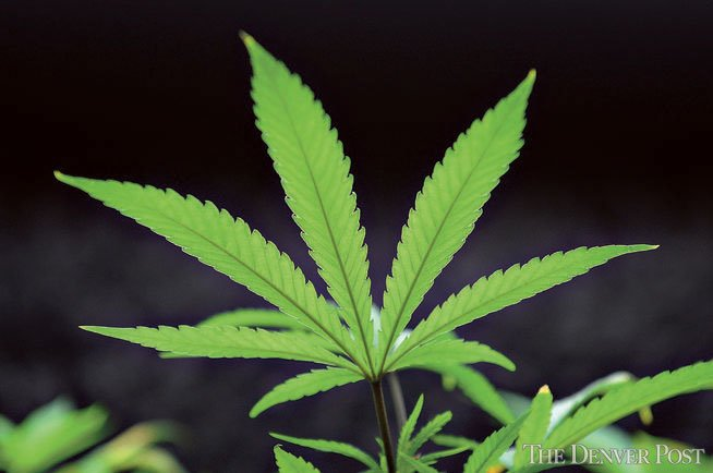 State university gives a big NO to pot leaf on T-shirt