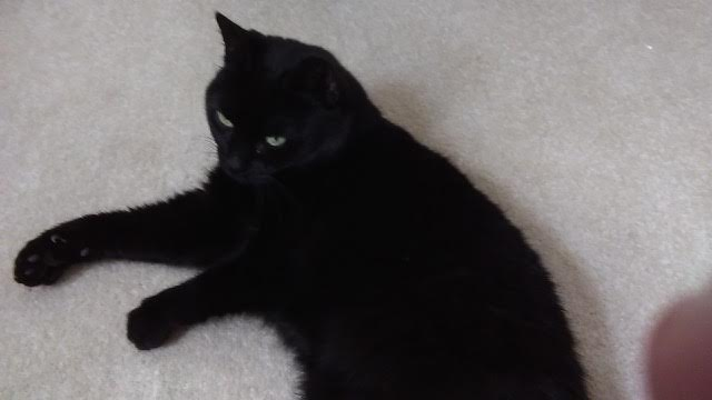 A friend has a lovely 13yo black cat who needs a home, it's human died recently :(  and needs some love. DM me https://t.co/N3jdYEwXkA