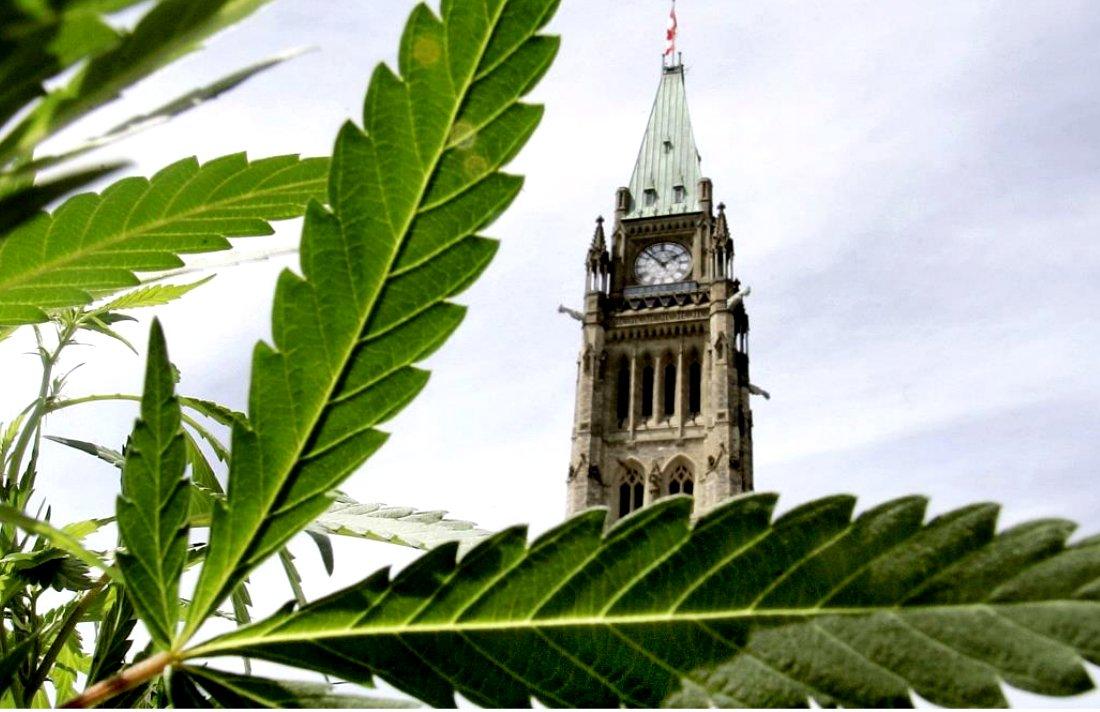 NDP Demands Immediate Decriminalization of Marijuana