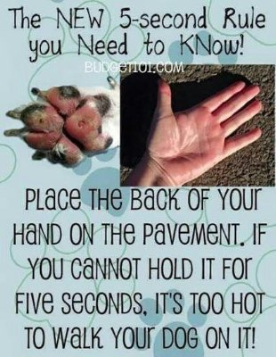 Keep your dog's paws safe this summer #5secondrule https://t.co/XEXolF05Vl