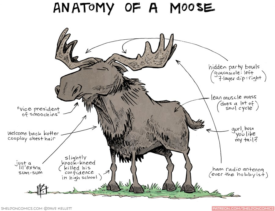 Dorable Anatomy Of A Moose Motif Anatomy And Physiology Biology