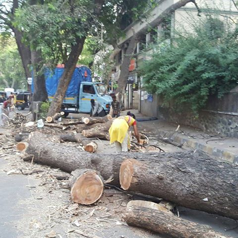 Hey @KiritSomaiya huge, beautiful trees are being cut down in Mulund. What is happening? Who is answerable? https://t.co/eYGpDVc8tD