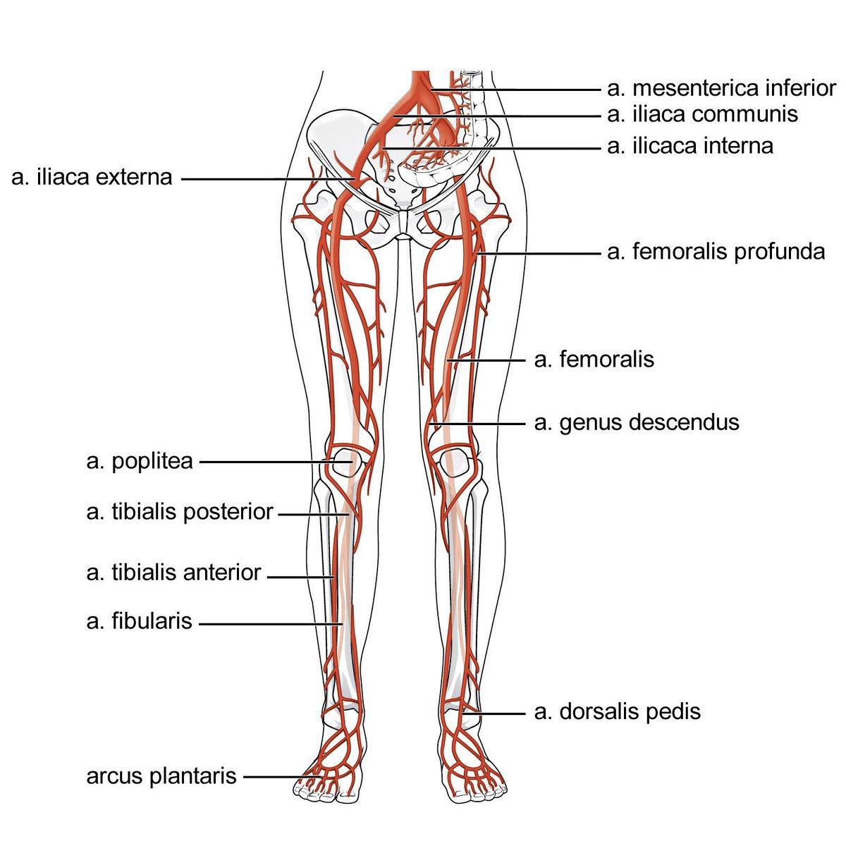 vaatziekten benen