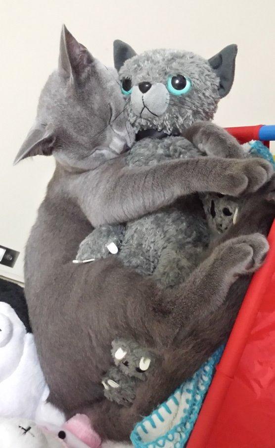 ぬいぐるみを抱っこしながら寝る妖怪の記事を書きましたので、ぜひ読んでみて下さい!nekonavi.jp/catblog/archiv… pic.twitter.com/4dx2OgqLHF