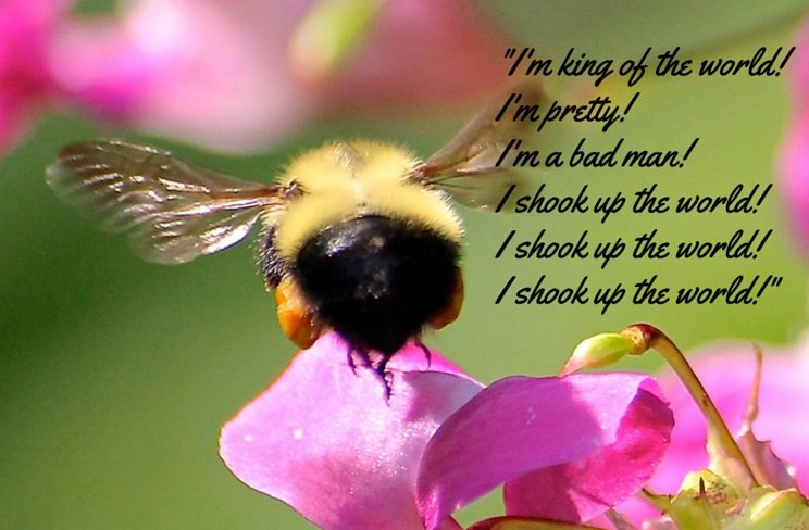 Bee Quotes: 'float Like A Butterfly, Sting Like A Bee': Remembering