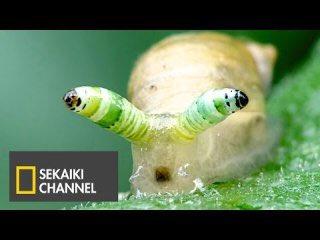 寄生虫 カタツムリ