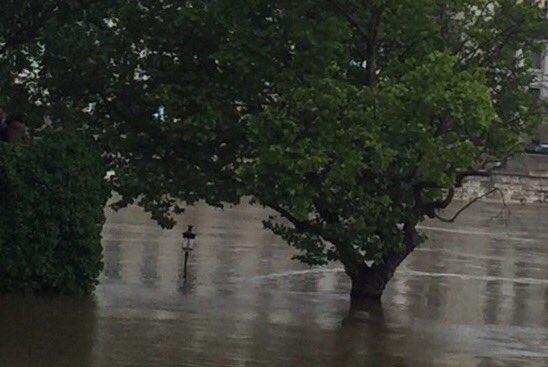 これ海じゃないよ、セーヌ川。木と木の間ににょきっと出てる潜水艦の潜望鏡みたいなのは街灯です。歩道にある街灯! 市内が浸水することはないとは思いますが、心配す。我が家はセーヌ川から約1キロの距離にあります。 pic.twitter.com/TxNQP7xnQ8