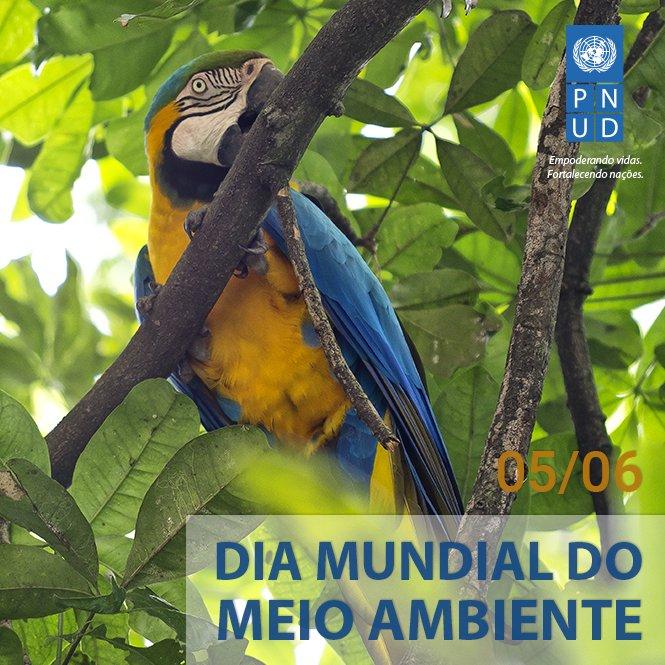 Hoje é o Dia Mundial do Meio Ambiente. Nesta data, a ONU chama a atenção para o tráfico ilegal de vida selvagem. https://t.co/IoXfpMhJUM