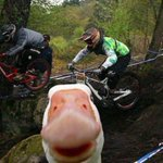 勝手に写真に写りこんでくる動物たちが可愛すぎる!