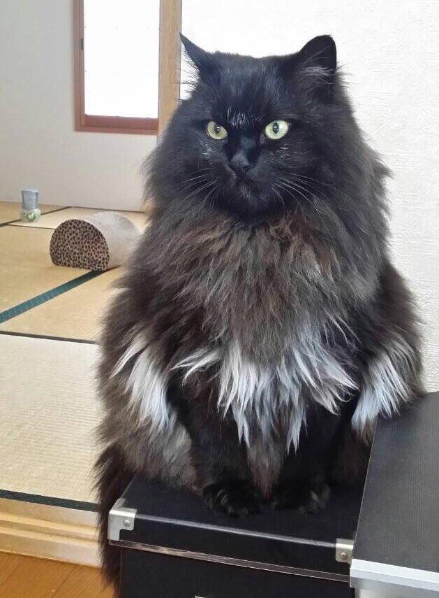 もふもふ猫のサマーカットを\u201cお任せ\u201dでお願いした→ 予想もでき