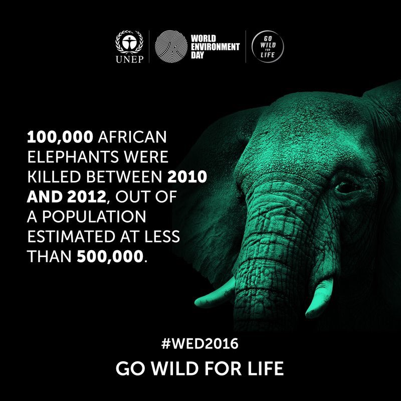 Go #WildforLife for #WorldEnvironmentDay - your voice matters in combating wildlife crime: https://t.co/bCHUiOoSLj
