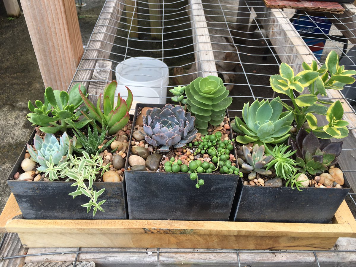 My new little succulent garden! #succulents