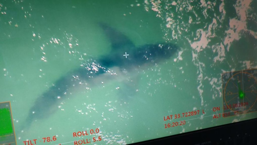 #Breaking Three 10-foot sharks spotted off of #HuntingtonBeach. One mile stretch of the beach has been closed. https://t.co/QxGXaF847d