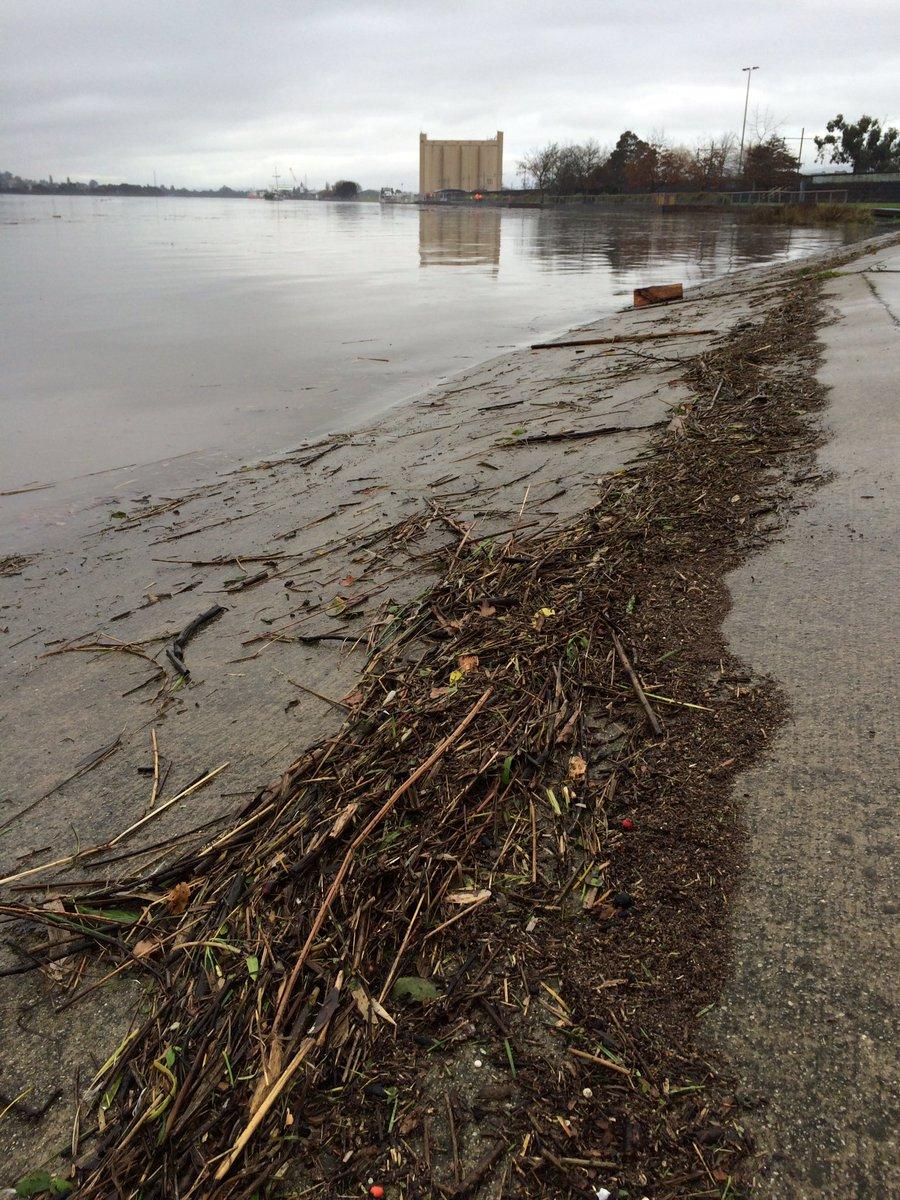 So much debris in the Tamar #Launceston #TasFloods #EastCoastLow #BigWetTas @penny_terry @abcnewsTas @WeathermanABC https://t.co/dqoYThvLEv