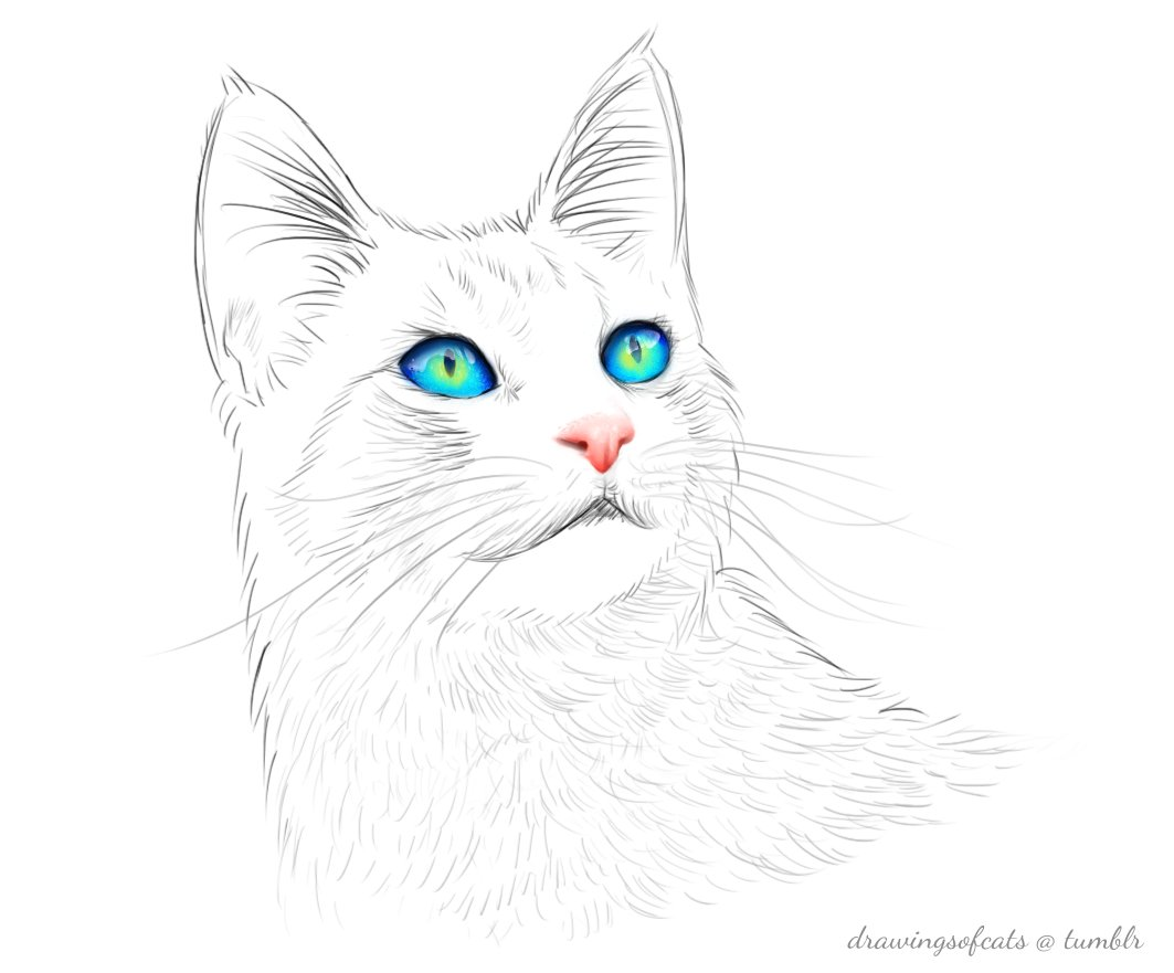 Drawings Of Cats Drawingsofcats Twitter