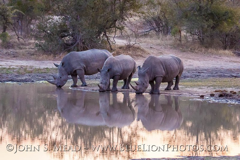 Kudos to @HelpingRhinos for great work in #Rhino #conservation  - Here's rhinos I saw in #SouthAfrica last July https://t.co/3PegoFMf9h
