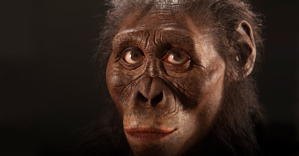 BREAKING—@goCMNH #fossil review confirms #Australopithecus #afarensis wasn't alone https://t.co/xPWPEJnZ2F @PNASNews https://t.co/jHK2IwXxkf