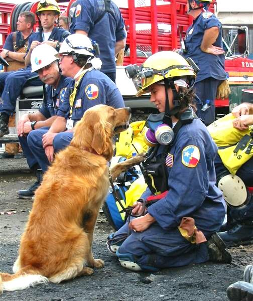 "16 y.o. retired @fema Texas TF1 #K9 ""Bretagne"", the last surviving Ground Zero Search & Rescue dog, has passed #RIP https://t.co/E7CgLW4WBm"