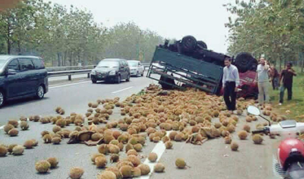 Image result for Foto Lori bawa durian terbalik