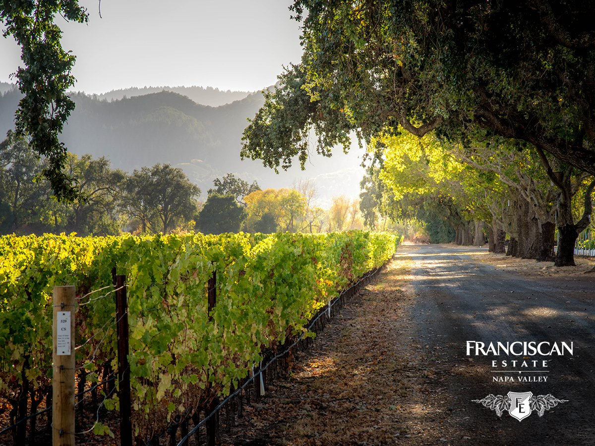 This morning's breathtaking view provided by our home estate in Oakville, located in the heart of Napa Valley. https://t.co/jm7QFnXvc3
