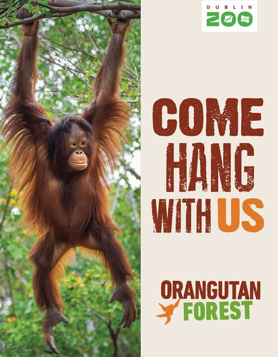 WIN a family day pass to Dublin Zoo to see the new Orangutan Forest! To enter, simply retweet using #HangWithOrangs https://t.co/53pnFsjEey