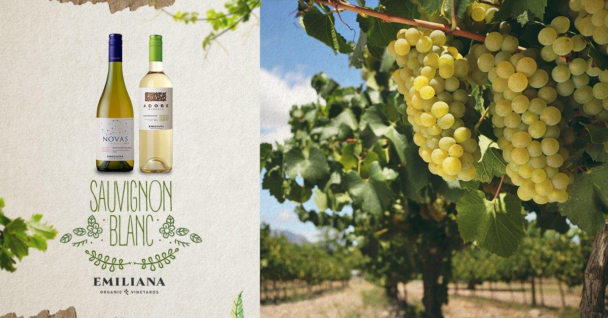Kết quả hình ảnh cho emiliana novas sauvignon blanc