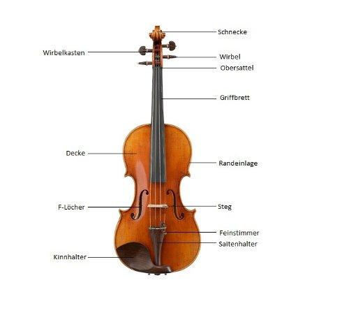 Aufbau Einer Violine