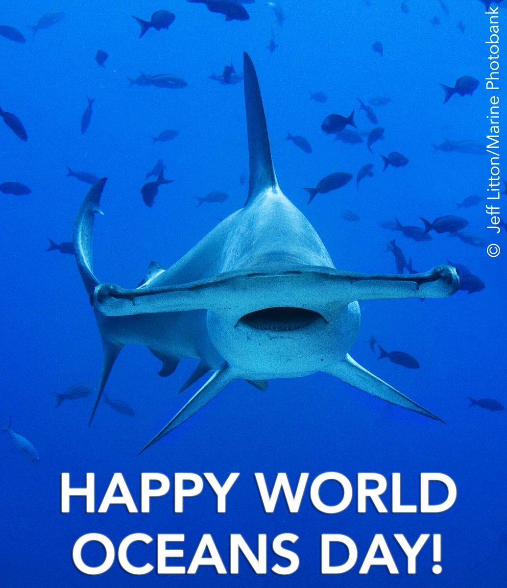 It's #WorldOceansDay. RT to show your love for our oceans that cover 70 percent of the Earth's surface. https://t.co/kakmltaUxI
