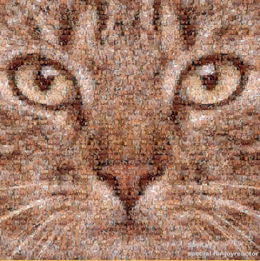 76+ Gambar Gambar Kucing Jangan Di Zoom Inspiratif