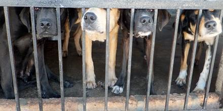 Danni causati da cani randagi? Il Comune è responsabile se...