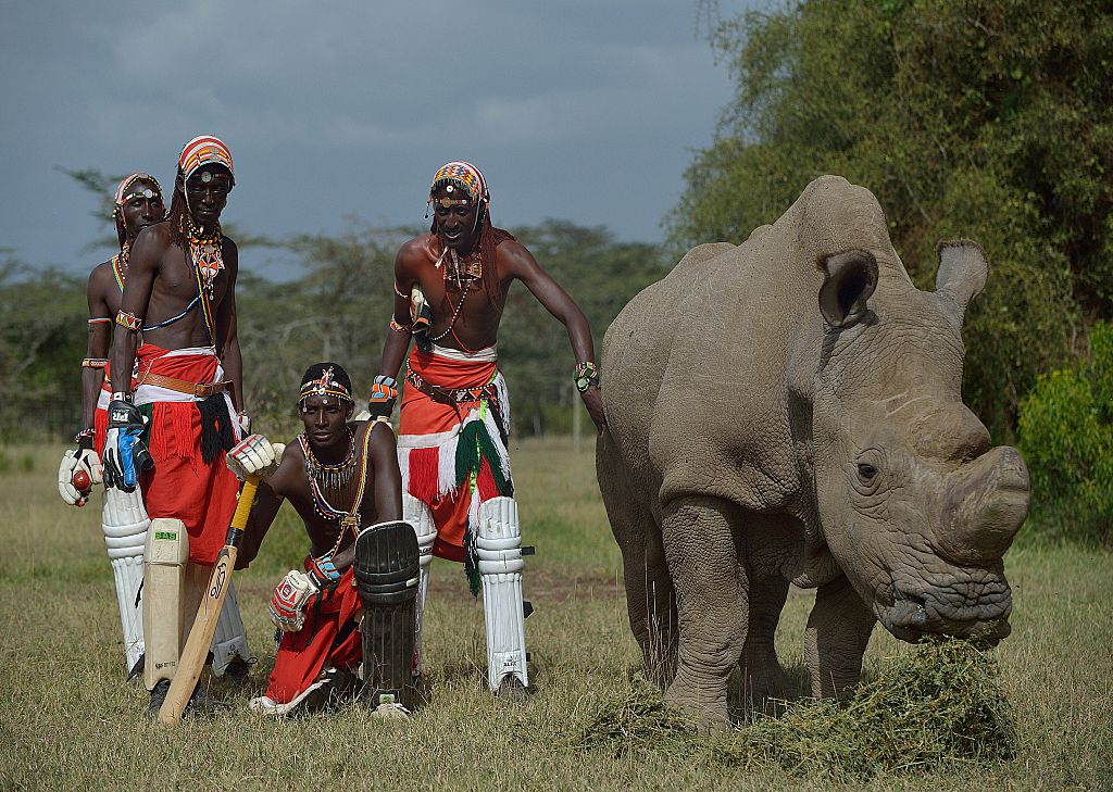 #ShotOfTheDay - The Maasai Cricket Warriors highlight the plight of rhinos and conservation in Africa