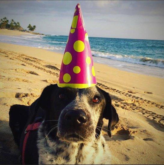 Badass Brooklyn Animal Rescue to celebrate five years with bash https://t.co/D8YE0WxkTT @BadassBK https://t.co/zAw5YwSzR0