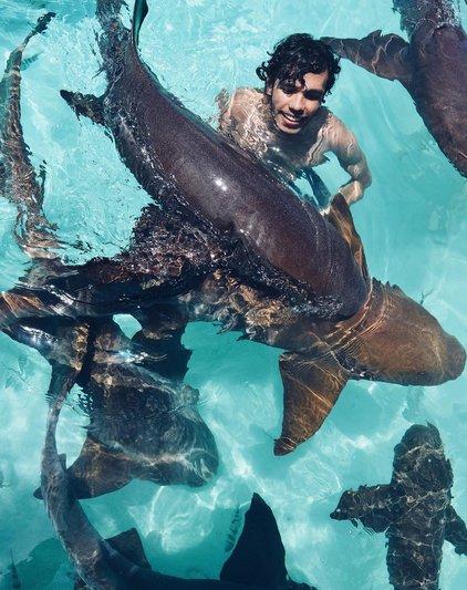 Distincthype On Twitter You Can Swim With Nurse Sharks In Exuma Bahamas