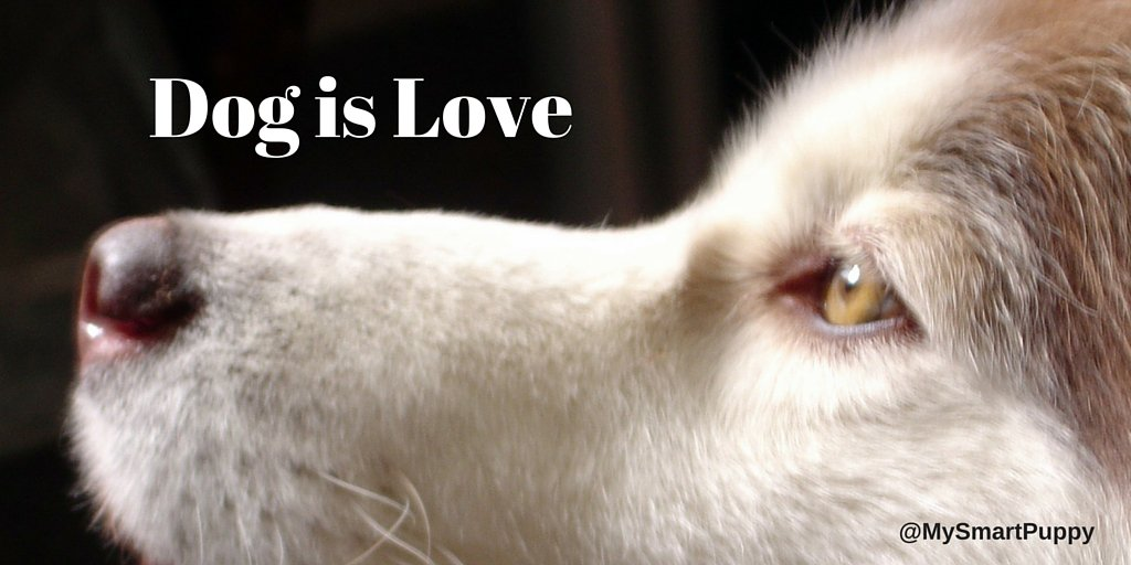 Dog is Love. #dogs https://t.co/3zKdYPWttF
