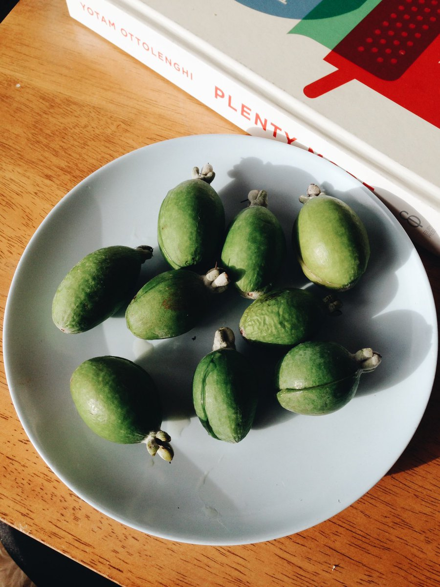 Its feijoa season! Creamy, tangy-sweetness #backyardgold https://t.co/bv8p3nmu15