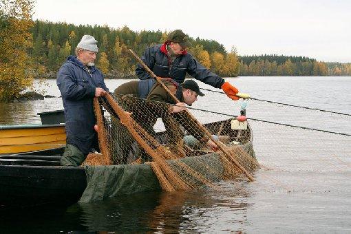 продажа сетей для рыбаков