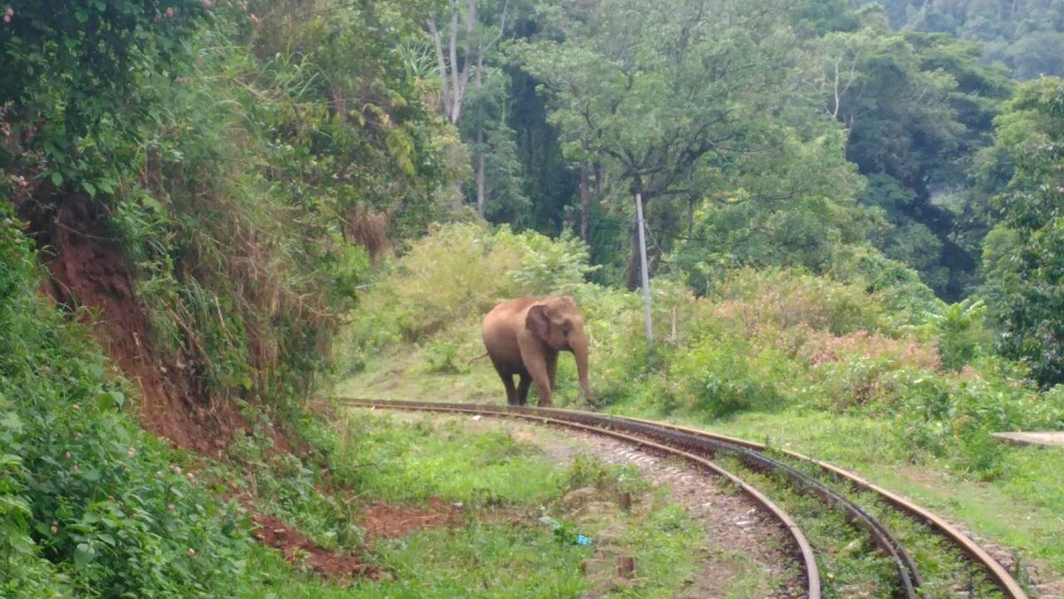 CkmX45PUoAE 8ww?format=jpg&name=medium - The Nilgiri mountain elephants