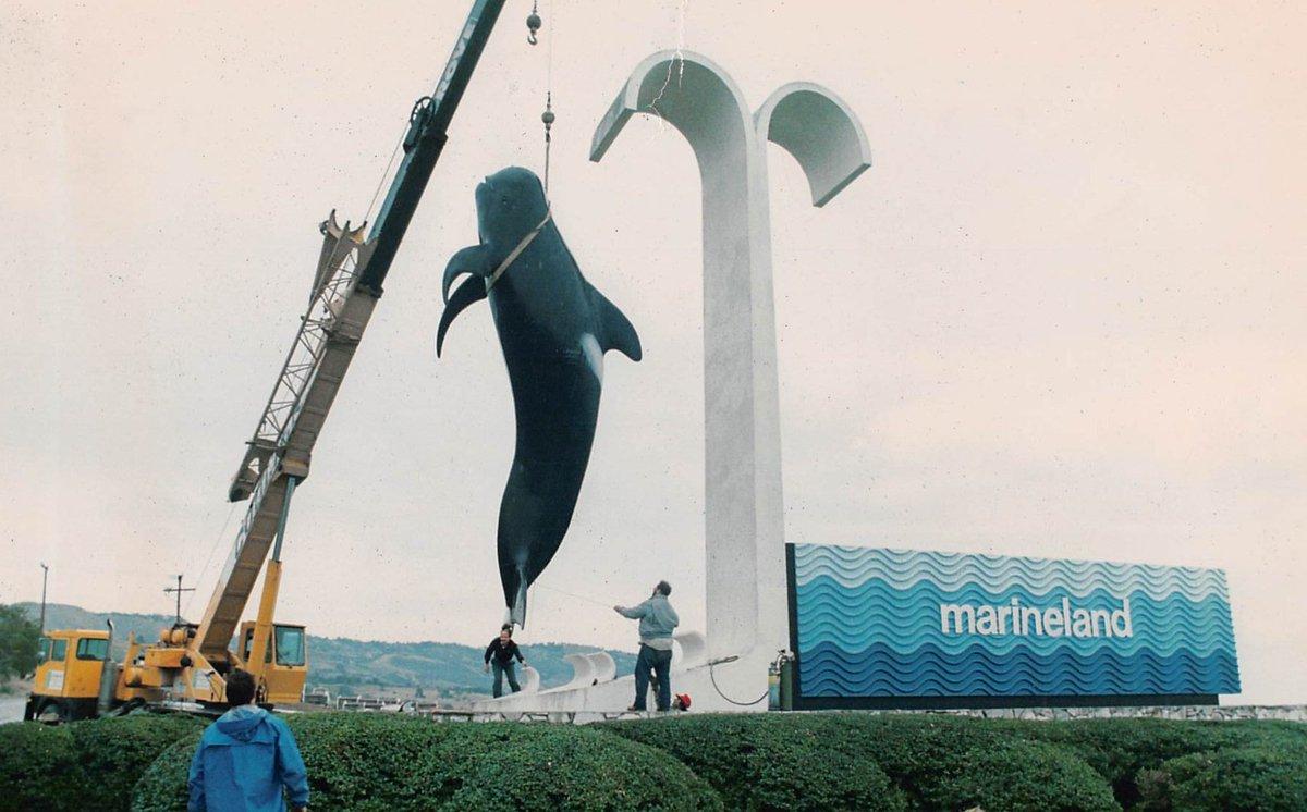 Bubbles, the oldest pilot whale in captivity, dies at SeaWorld