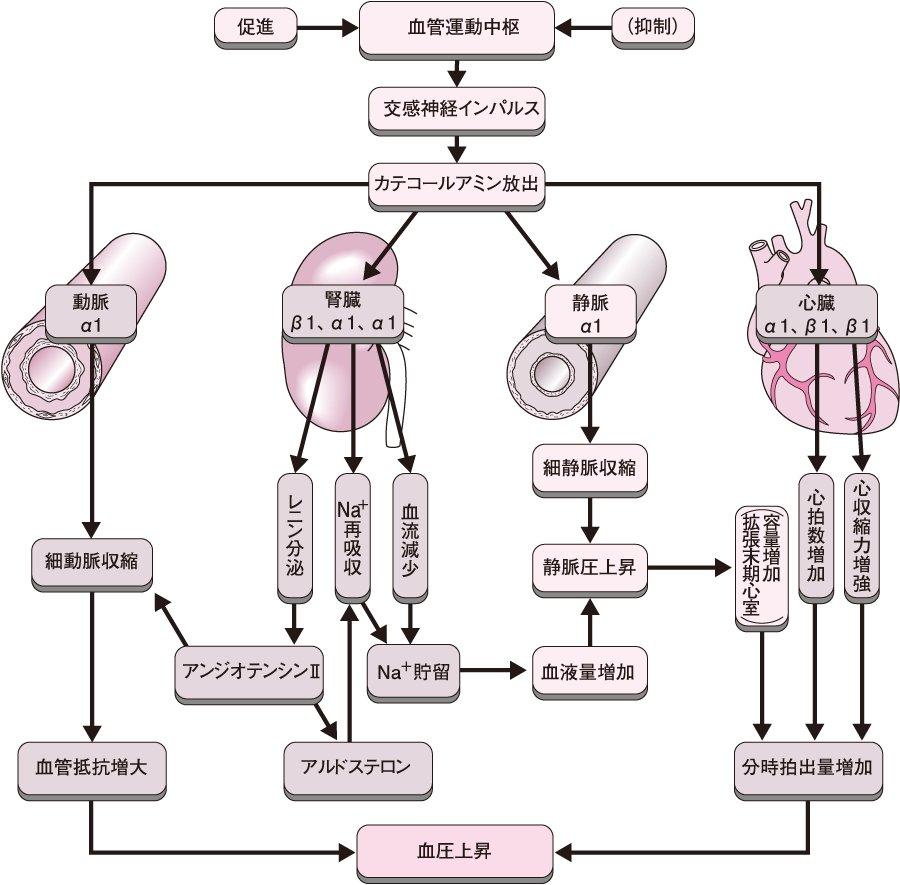 アドレナリン反転 - JapaneseCla...